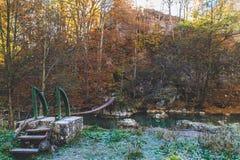Dagsljus för förkylning för vatten för höstskogträd härligt nytt grönt arkivfoto