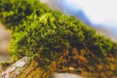Dagsljus för gräsplan för mossa för höstskogträd härligt royaltyfri bild
