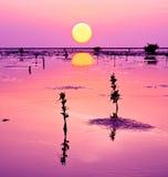 dagslut in mot våtmark Arkivbilder