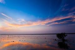 dagslut in mot våtmark Royaltyfri Bild