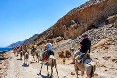 DAHAB, EGYPTE - 26 AOÛT 2010 : Les touristes sur le chameau se déclenchent en Abu Galum, Egypte Image stock