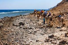 DAHAB, EGYPTE - 26 AOÛT 2010 : Les touristes sur le chameau se déclenchent en Abu Galum, Egypte Photographie stock