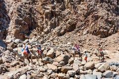 DAHAB, EGYPTE - 26 AOÛT 2010 : Les touristes sur le chameau se déclenchent en Abu Galum, Egypte Photographie stock libre de droits