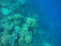 Coral reefs Royalty Free Stock Photo