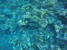 Coral reefs Stock Photos