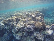 Coral reefs colors Stock Photos