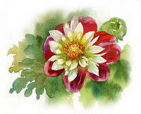 Dahlia. Bright colorful bouquet of garden and wild natural flowers Stock Images