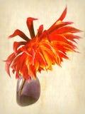 dahlia Photos libres de droits