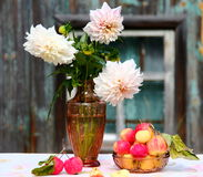 Dahlia and apples. Dahlia flowers and organic apples Royalty Free Stock Photography