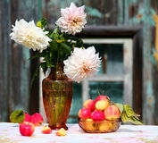 Dahlia and apples. Dahlia flowers and organic apples Royalty Free Stock Image