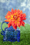 Dahlia in blue container Royalty Free Stock Photos
