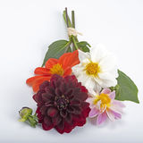 Dahlia bouquet Stock Image