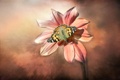 Dahlia. A butterfly on flower in a autumn day Royalty Free Stock Images