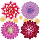 Dahlia Closeup illustration de vecteur