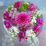 Dahlia and daisy flowers on table, flowering table deceoration, blooming summer flower arrangement Stock Photos