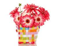 Dahlia en gerber flowers Stock Images