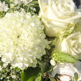 Dahlia et roses blancs Photo stock