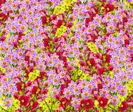 Dahlia Flower Foto de archivo libre de regalías