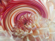 Dahlia flower on the background of rainbow spiral. floral composition. floral background. Stock Photo