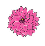 Dahlia flower cartoon Royalty Free Stock Photo