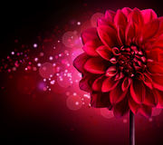 Dahlia flower design Stock Images