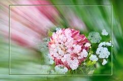 Dahlia Flower-kaart met kader in dubbele blootstellingstechniek Stock Afbeelding