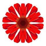 Dahlia Flower Mandala Isolated caleidoscopica rossa su bianco Immagini Stock
