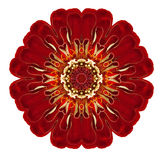 Dahlia Flower Mandala Isolated kaléïdoscopique pourpre sur le blanc Photo libre de droits