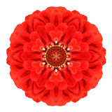 Dahlia Flower Mandala Isolated kaléïdoscopique rouge sur le blanc Image stock