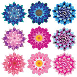 Dahlia flower petals cascading. Vector flowers dahlia colorful petals overlapping relay charming natural beauty of the set Stock Photography