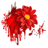 Dahlia flower vector illustration  hand drawn Stock Images