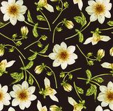 Dahlia flower watercolor pattern. Dahlia flower watercolor botanical pattern Stock Photography