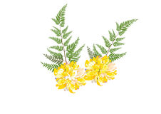 Dahlia flower .yellow flower with fern on white background. Illustration Royalty Free Stock Images