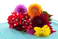 Dahlia flowers Stock Photography