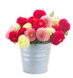 Dahlia Flowers Royaltyfri Foto