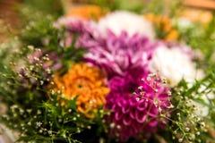 Dahlia Flowers Stock Foto