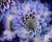 Dahlia flowers background with blurred elements Royalty Free Stock Photos