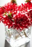 Dahlia flowers Royalty Free Stock Photo