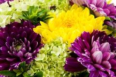 Dahlia flowers in closeup royalty free stock photo