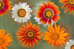 Dahlia flowers on colorful background Stock Photo
