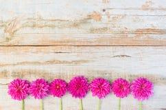 Dahlia Flowers Decoration rose Photo libre de droits