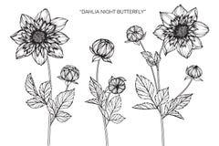 Dahlia flowers drawing and sketch Fotografía de archivo libre de regalías