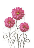 Dahlia flowers drawing. Vector illustration of dahlia flowers with drawn sprouts Royalty Free Stock Image