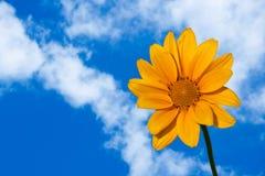 Dahlia jaune images libres de droits