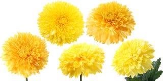 Dahlia jaune photographie stock