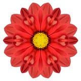 Dahlia Mandala Flower Kaleidoscopic Isolated roja en blanco Fotos de archivo libres de regalías