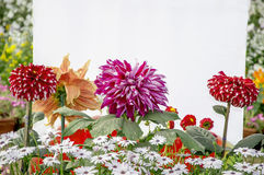 Dahlia and other flowers Royalty Free Stock Photos