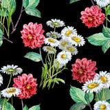 Dahlia rouge de bouquet et camomilles blanches d'aquarelle Modèle sans couture floral sur un fond noir illustration de vecteur