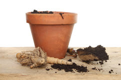 Dahlia tuber and pot Stock Photography
