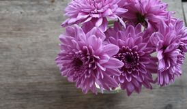 Dahlia Tubers in the vase. On the wood table background Royalty Free Stock Photo